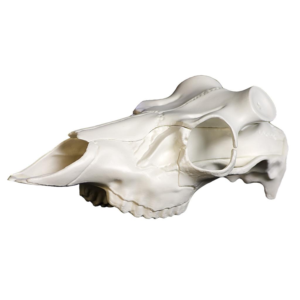 Mountain Mikes Skull Master  <br>  Universal Antler Mounting Kit