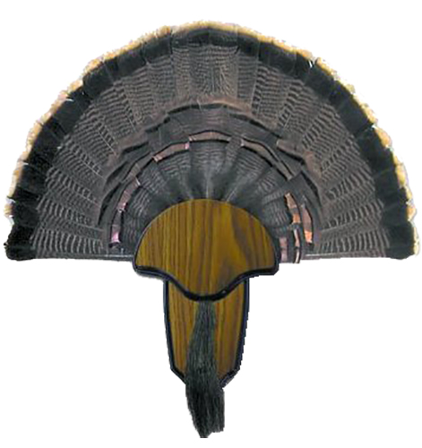 Hunters Specialties Turkey Mount Kit  <br>  Tail & Beard